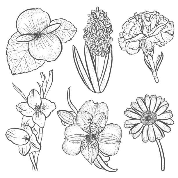 satz von blumen alstroemeria, begonie, nelken, gerbera und gladiolen, hyazinthe - inkalilie stock-grafiken, -clipart, -cartoons und -symbole