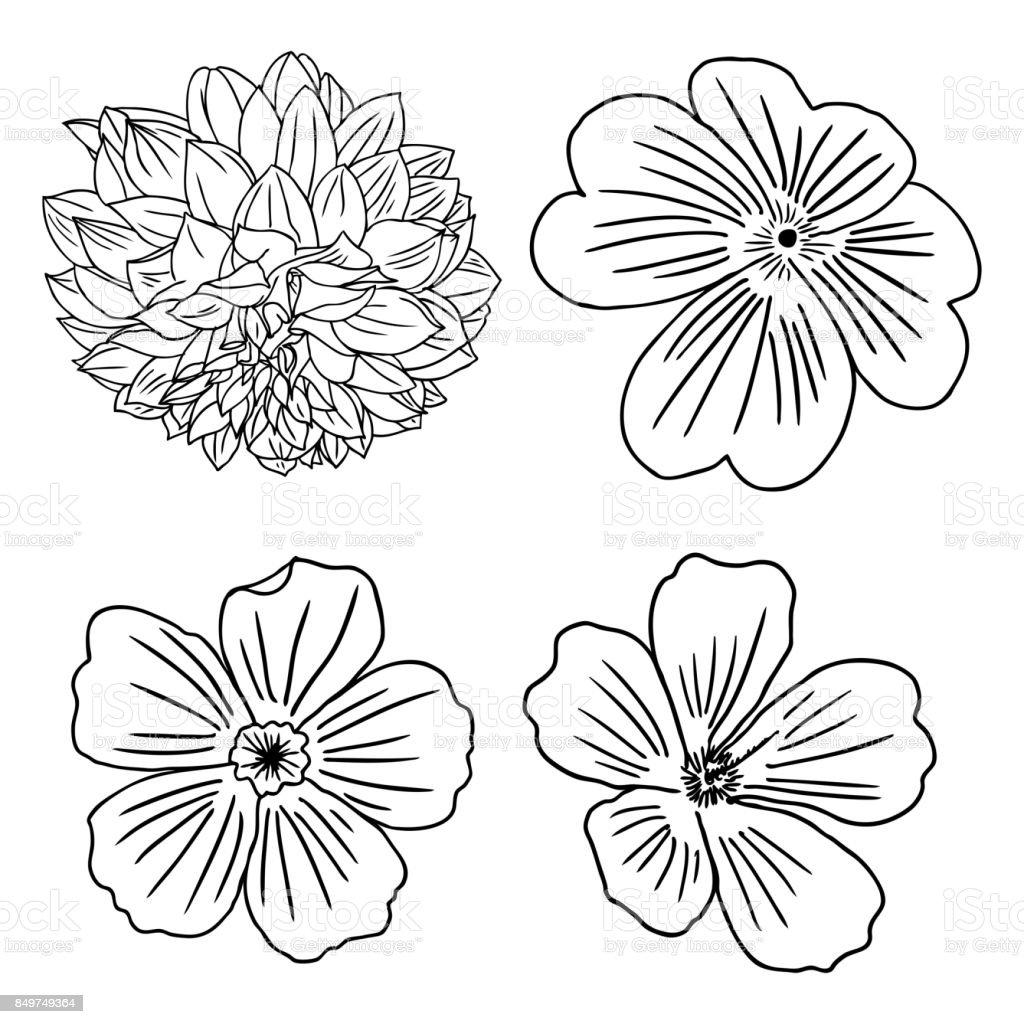 Satz Von Blumen Schwarz Weiss Blumen Set Sammlung Von Hand Gezeichnet