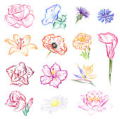 Set of flowers, hand drawn vector brush sketches.