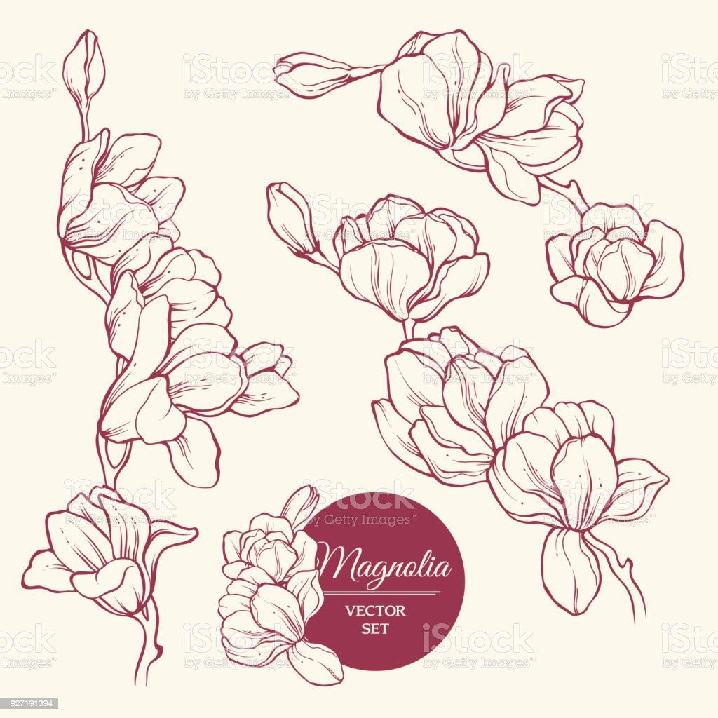 Set Of Flowers Magnolia Sketch Vector Illustration Stock Vector Art