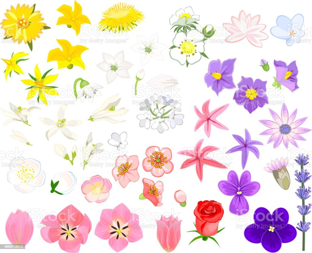 Set of flowers of different colors on white background stock vector apple fruit cucumber lotus root lotus water lily plant set of flowers of different colors izmirmasajfo