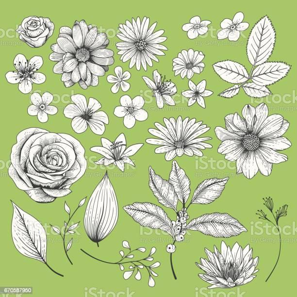 Set of flowers vector id670587950?b=1&k=6&m=670587950&s=612x612&h=6jjrvh1gjmntud9  8lsv1lrcgh0jz7zmo9jodx4we0=