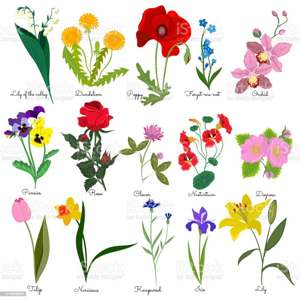 Namen bild blumen mit Diese Blumenarten