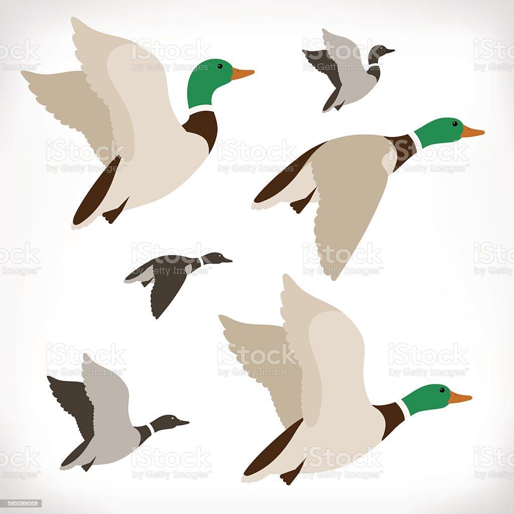Set of flying wild ducks vector art illustration
