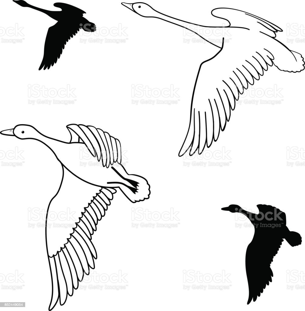 set of flying wild ducks. Vector illustration