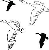 set of flying wild ducks. Vector illustration