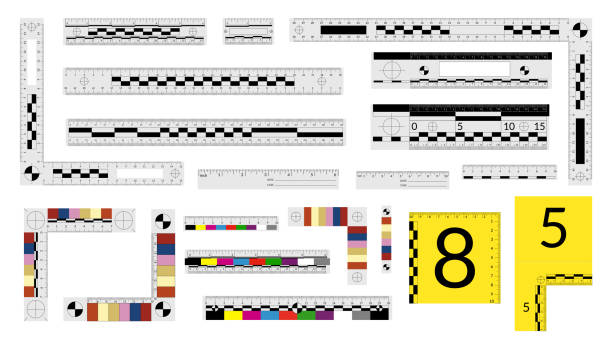 Set of forensic rulers for police detectives to measure crime evidence. Set of forensic rulers for police detectives to measure crime evidence crime scene stock illustrations