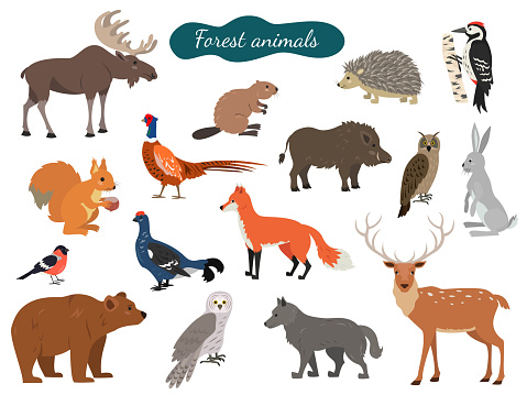 Set of forest animals on white background.