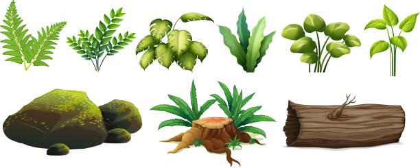 A Set of Forest Element A Set of Forest Element illustration moss stock illustrations