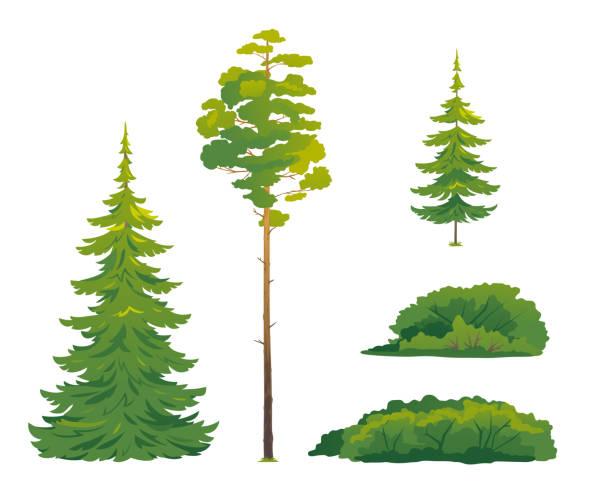 bildbanksillustrationer, clip art samt tecknat material och ikoner med uppsättning skogsträd isolerade - fur