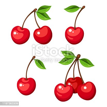 Vector illustration of four cherry berries and bunches of cherry isolated on a white background.