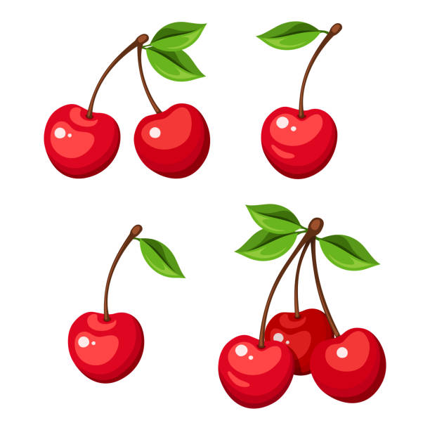 Set of four bunches of cherry berries. Vector illustration. Vector illustration of four cherry berries and bunches of cherry isolated on a white background. cherry stock illustrations