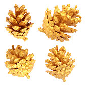 Four single pine cones isolated on white paper background.  Hand painted nature shapes. Beautiful light sunlight create amazing gradients in shades of yellow and brown. Vector file - enlarge without lost the quality.