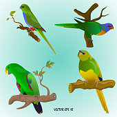 set of four realistic colorful parrots on branches, isolated,  light blue background