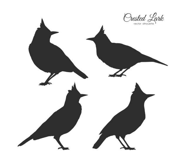 ilustrações de stock, clip art, desenhos animados e ícones de set of four silhouette of crested lark. little birds on white background - bills couple