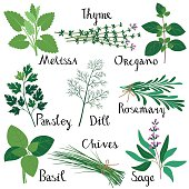 Set of fresh herbs isolated: Melissa, Basil, Rosemary, Parsley, Oregano, Thyme, Dill, Chives, Sage. RGB, EPS 10.