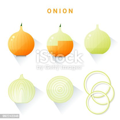 Set of fresh onions isolated on white background , vector , illustration