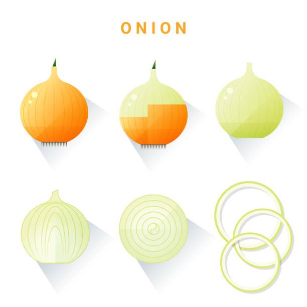 set of fresh onions isolated on white background , vector , illustration - onion stock illustrations