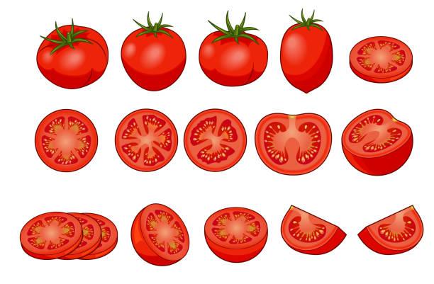 トマト 断面 イラスト素材