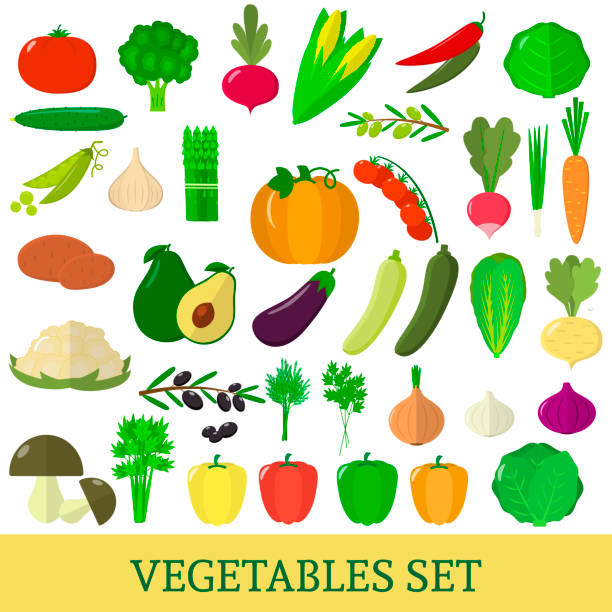 A set of fresh vegetable illustrations on a white background. A set of vegetables. Organic vegetarian healthy food isolated on a white background. Vector. scallion stock illustrations
