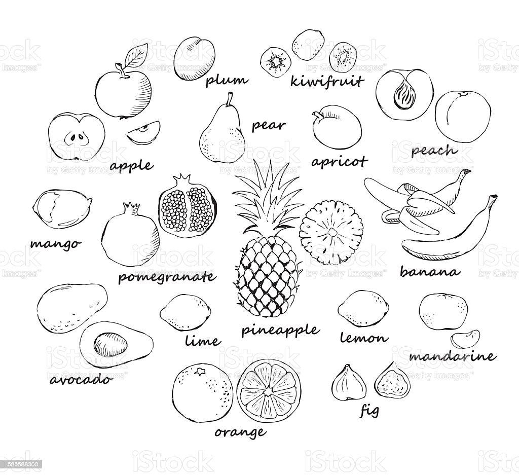 Set of fruit doodles vector art illustration