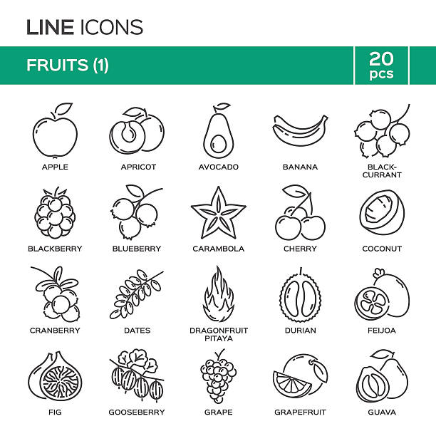 Set of fruit thin line icons in alphabetical order. Set of fruit thin line icons in alphabetical order. Fruit symbols, labels, emblems. Vector illustration. Part 1. avocado clipart stock illustrations