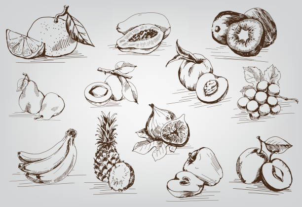 set of fruits compilation of vector sketches of fruit fig stock illustrations