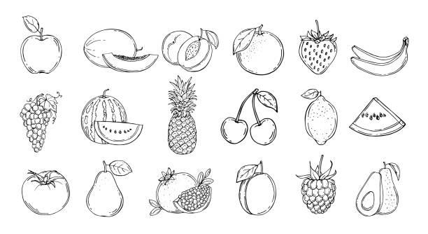Set of fruits. Vector illustration. Hand drawn Set of fruits. Vector illustration. Hand drawn avocado drawings stock illustrations