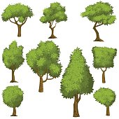 Set of funny cartoon trees and green bushes.