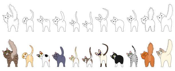 bildbanksillustrationer, clip art samt tecknat material och ikoner med uppsättning av roliga katter som visar sina rumpor - bum