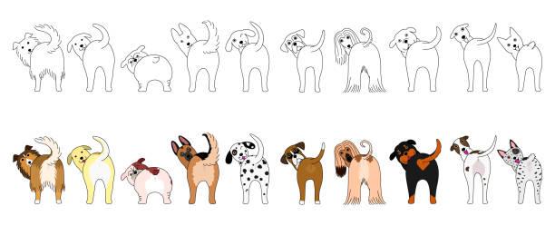 bildbanksillustrationer, clip art samt tecknat material och ikoner med uppsättning roliga stora hundar som visar sina rumpor - bum