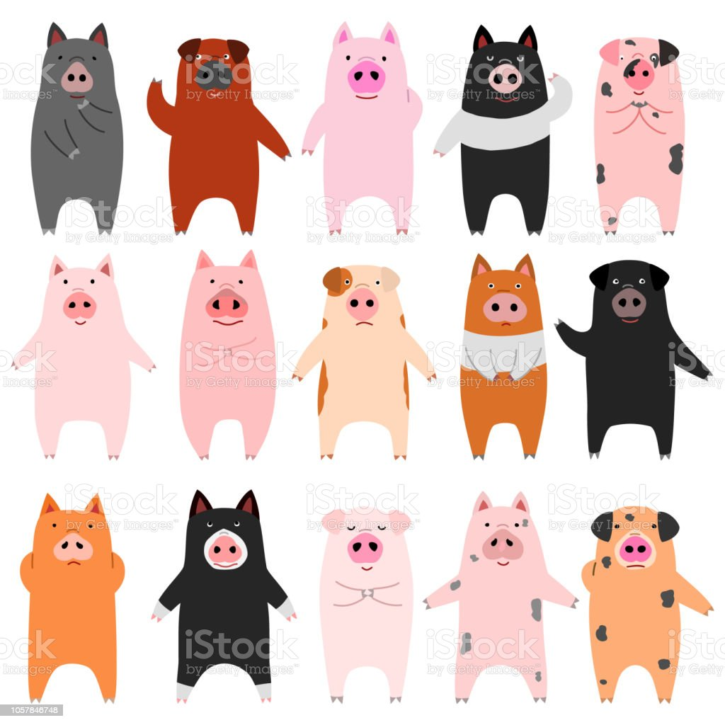 set of funny pigs vector art illustration