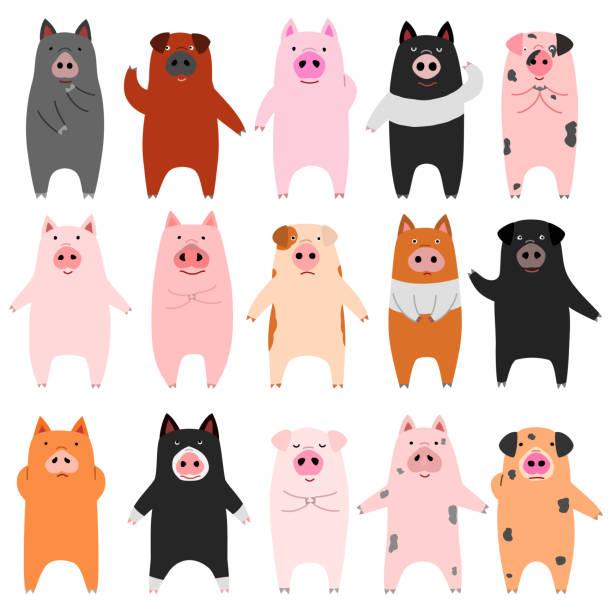 面白い豚のセット ベクターアートイラスト