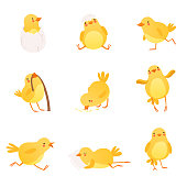 Set of funny yellow chicken in various situations. Cartoon character of little farm bird. Flat design for postcard, sticker, children s book. Colorful vector illustration isolated on white background.