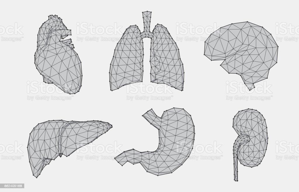 Set of geometric anatomy vector art illustration