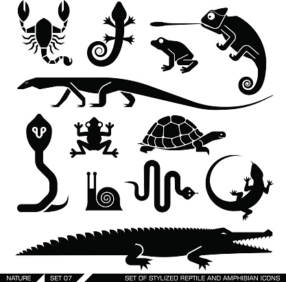 Set of geometrically stylized reptiles and amphibians icons