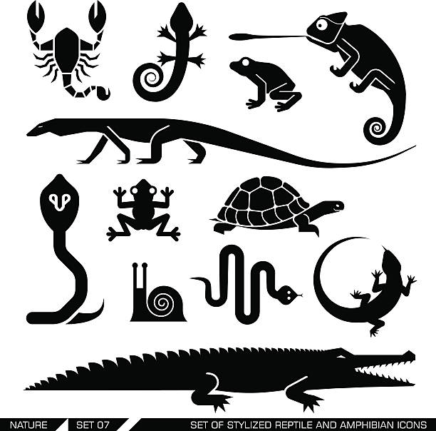 Set of geometrically stylized reptiles and amphibians icons Set of various animal icons: scorpions, snakes, frogs, lizards, snails, crocodiles, turtles, cobra, chameleon, gecko. Vector illustration. reptiles stock illustrations