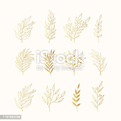 Set of golden floral design branches. Gold decoration elements for invitation, wedding cards, christmas, greeting cards. Vector isolated.