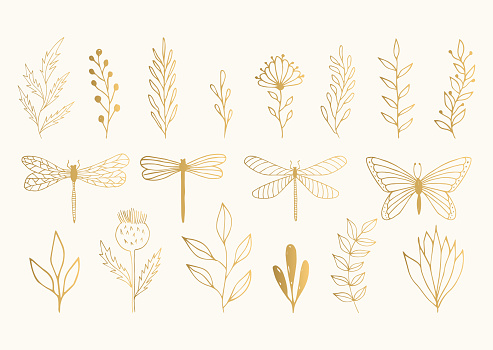 Set of golden herbs, dragonflies and butterfly. Vector summer illustration. Isolated. Hand drawn ink texture.