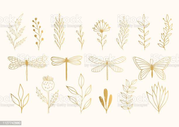 Set of golden herbs dragonflies and butterfly vector summer isolated vector id1127742880?b=1&k=6&m=1127742880&s=612x612&h=qkan21tu9yd003vtr1xo2bd0gce6znwwkyk8jdiashg=