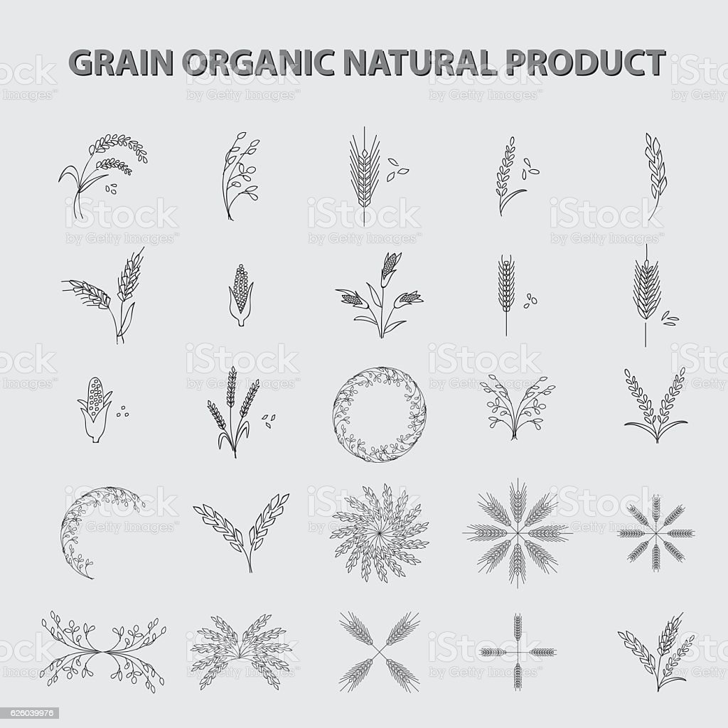 set of grain organic natural product. concept vector illustration vector art illustration