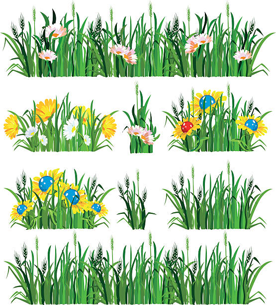 bildbanksillustrationer, clip art samt tecknat material och ikoner med set of grass and flowers - single pampas grass