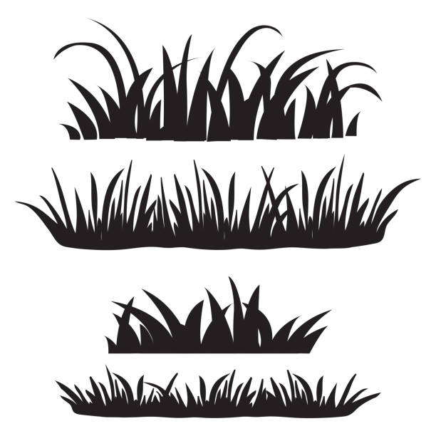 Set of grass, black silhouettes isolated on white background. Set of design elements of nature. Vector illustration Set of grass, black silhouettes isolated on white background. Set of design elements of nature. Vector illustration tassel stock illustrations