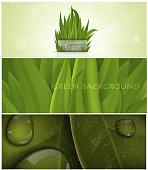 set of grass nature banner for facebook Poster vector Design