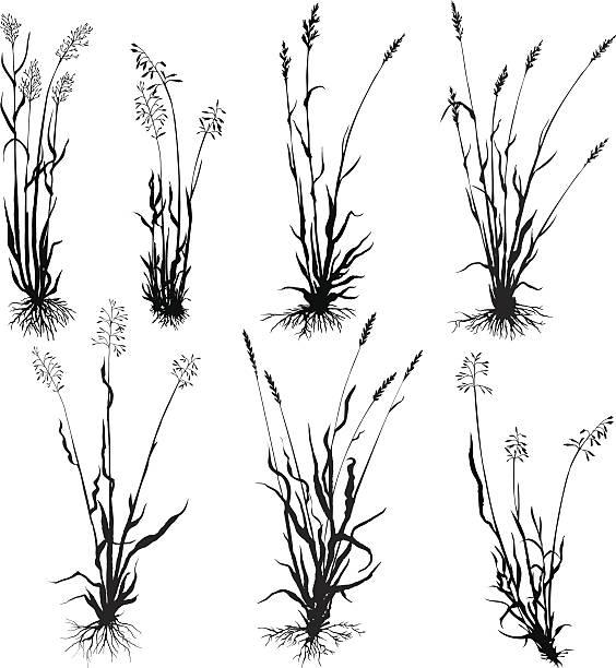 illustrations, cliparts, dessins animés et icônes de ensemble de silhouettes de l'herbe - plante sauvage