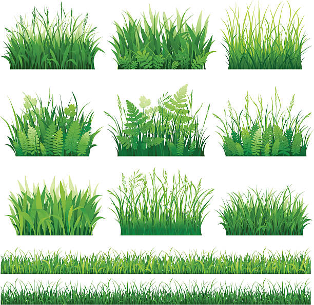 stockillustraties, clipart, cartoons en iconen met set of grass - grasspriet