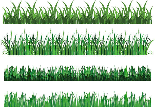 bildbanksillustrationer, clip art samt tecknat material och ikoner med set of grass - single pampas grass