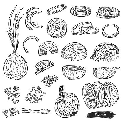 Set of green and white onion chopped, engraving vector illustration isolated.