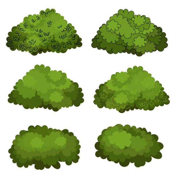 set of green bushes vector - куст stock illustrations