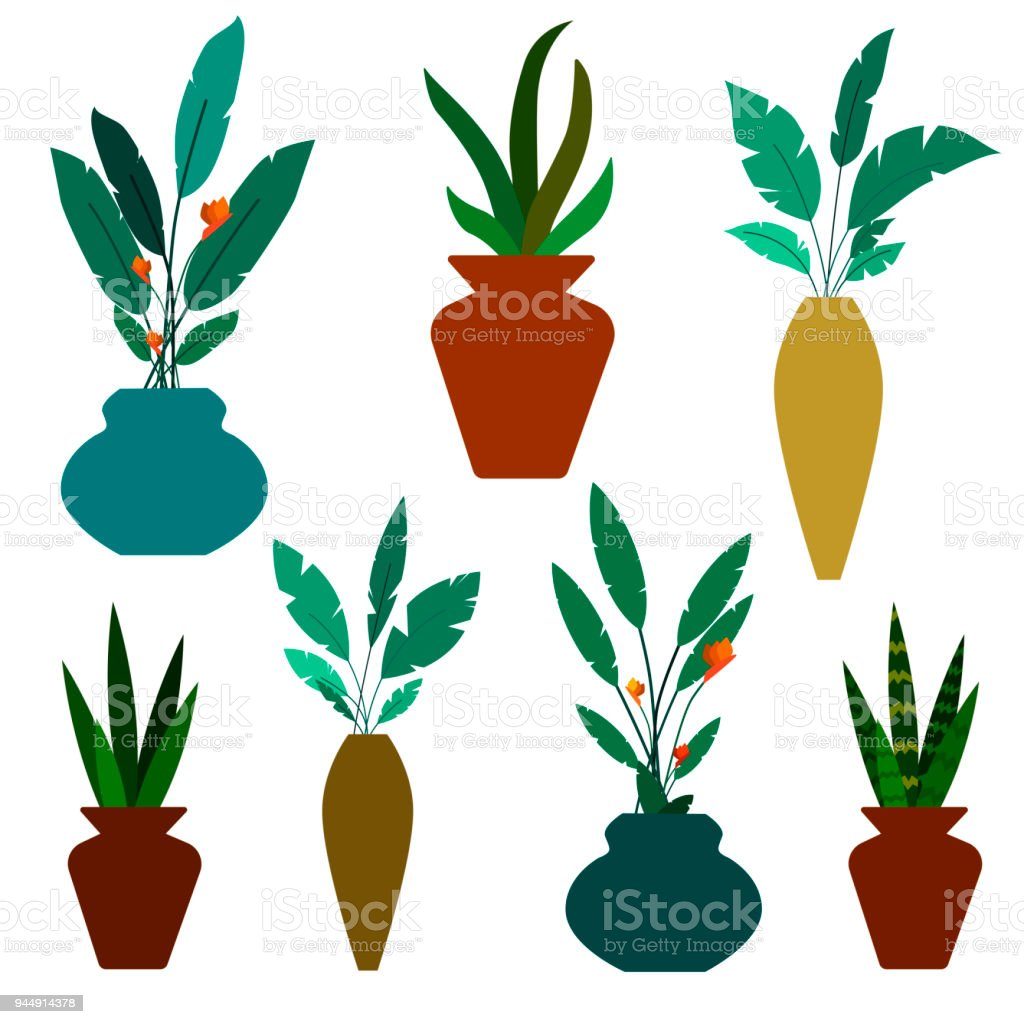 Set Of Green Decorative House Plants And Flowers In Vases Vector